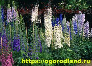 Какие цветы посадить на рассаду в апреле 11