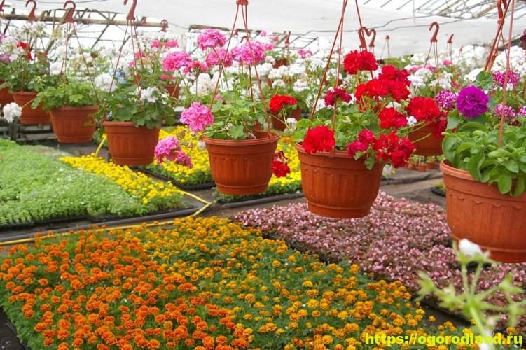 Какие цветы посадить на рассаду в апреле 1
