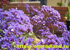 Какие цветы посадить на рассаду в апреле 8
