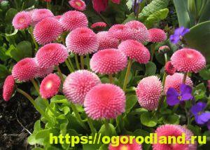 Какие цветы посадить на рассаду в апреле 13
