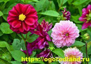Какие цветы посадить на рассаду в апреле 9