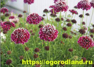 Какие цветы посадить на рассаду в апреле 12