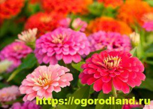 Какие цветы посадить на рассаду в апреле 15