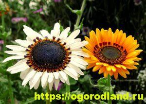 Какие цветы посадить на рассаду в апреле 10