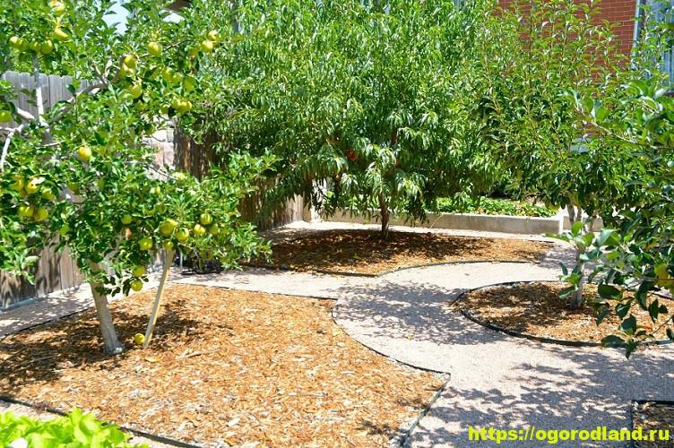 Планировка сада или совместимость садовых культур