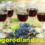 Самодельные виноградные настойки в домашних условиях из винограда Изабелла