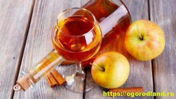 Как сделать вкусное полусладкое, сухое и крепленое яблочное вино в домашних условиях?