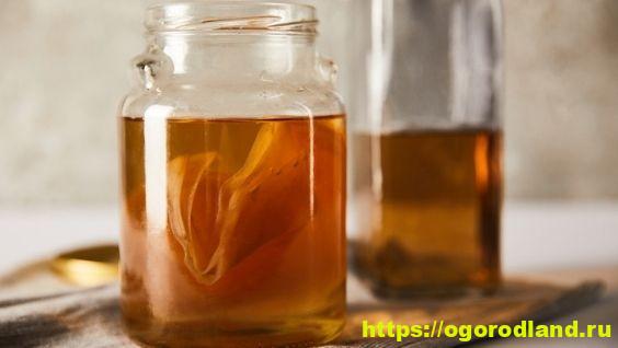 Польза чайного гриба и противопоказания, что лечит