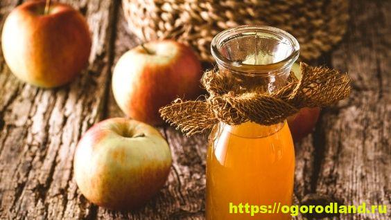 Домашний сидр из яблок, рецепт быстрого приготовления