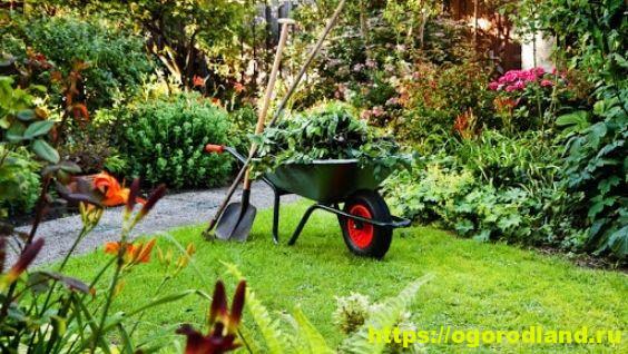 Уход за садом