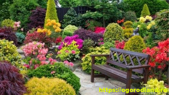 Многолетние цветы цветущие долго – фото с названиями