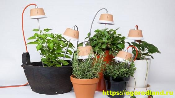 Фитолампы: искусственное освещение для растений, виды и особенности приборов