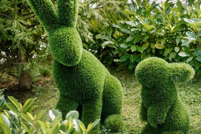 Искусство топиари: зеленые шедевры на участке