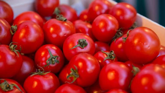 Как получить богатый урожай томатов