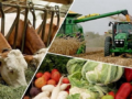 Проблемы развития агропромышленных комплексов
