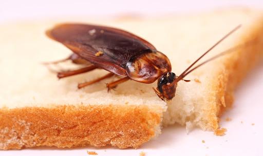 Как избавиться от тараканов навсегда?