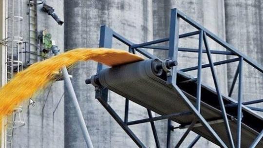 Использование ленточного транспортера для зерна