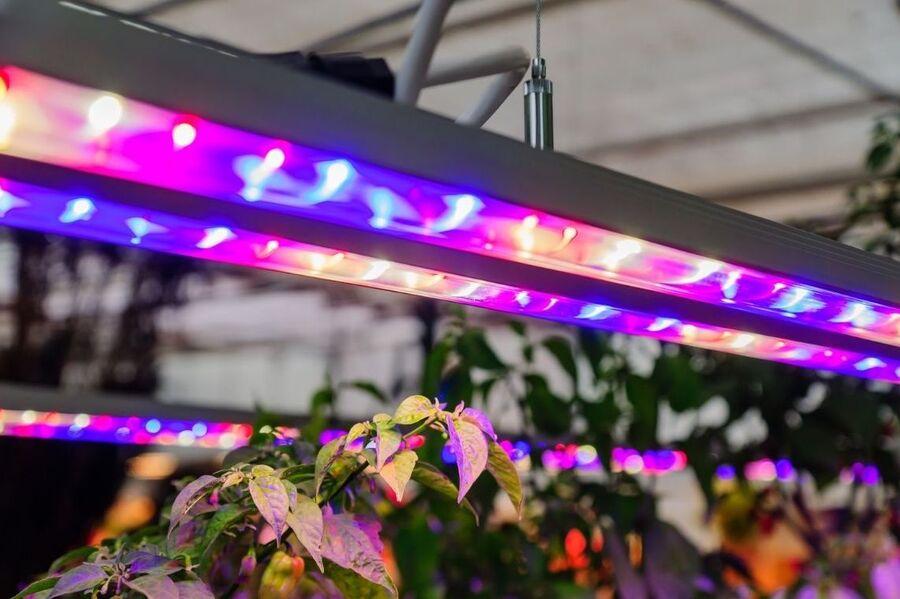 О разновидностях ламп для растений и преимуществах их использования