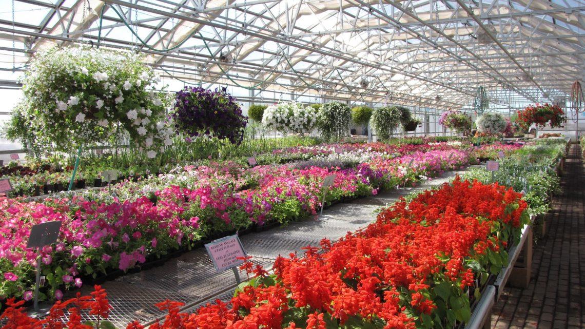 Садовые центры по франшизе: выгодно ли?