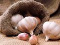 Озимый чеснок – несколько секретов хорошего урожая
