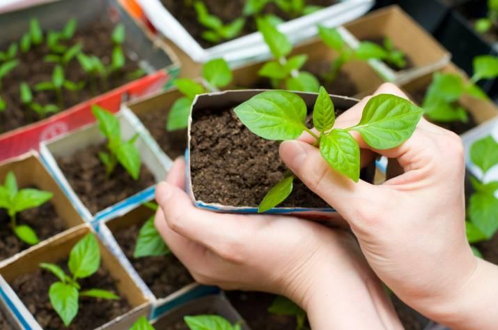 Энтомофаги как естественная защита растений от вредителей