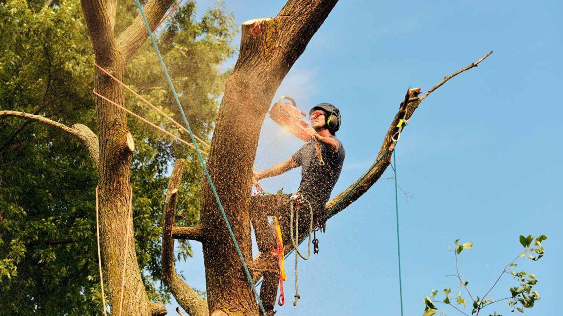 Особенность валки деревьев на дачных участках